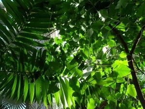 Canopy Hothouse
