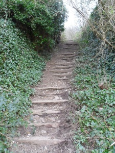 Where do these steps lead?