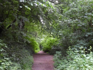 The Tow Path in June