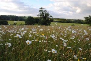 Meadow in June