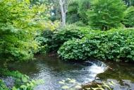 3.Mount Usher Gardens