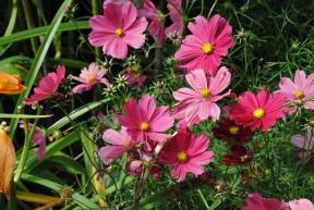 Pink Flowers Mount Usher