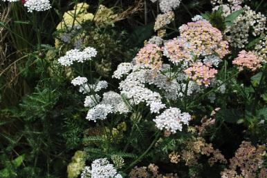 White Flowers Mount Usher