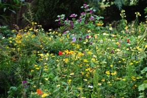 Wildflower corner Malahide