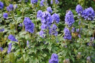 4.Blue Tall Flowers
