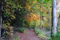 Woodside Trail