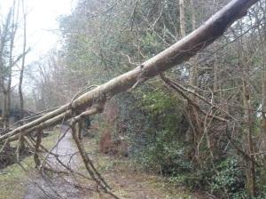 Branch Down