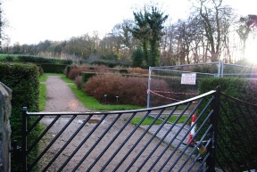 potentilla garden