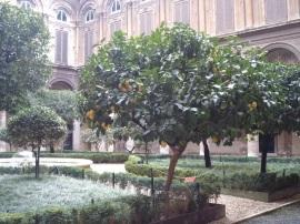 Lemon Tree in a courtyard