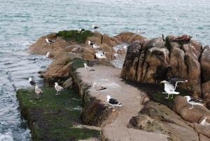 Gulls, Bullock Harbour