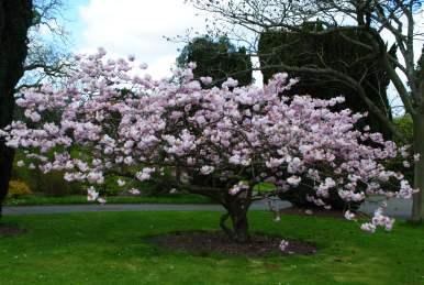 Botanical Gardens 004
