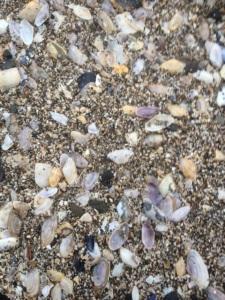 shells easter sunday