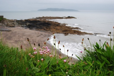 Sea Pinks and Soldiers